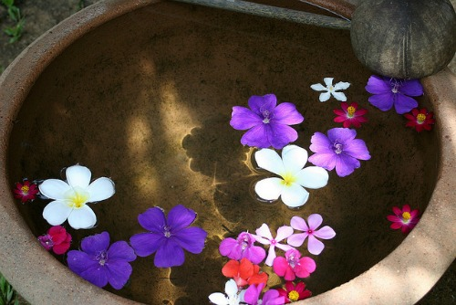 flowers floating in a beautiful metal bowl of water